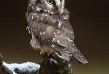 Owl! <3