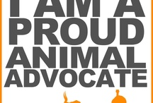 Passionate About Animal Welfare