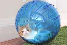 Katter Cats