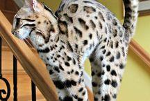 Cat lovin / by Mikayla Reichhold