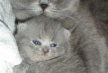 kittens of katen