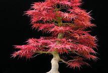 Bonsai Tree Hobbie / by Rachel Ray