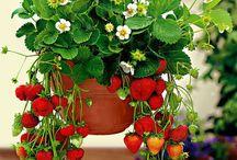 plantas criativas