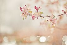 Spring / With promise in the air and checking daily for new signs of life. Spring is the  season of rebirth.