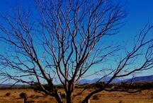 Trees / by Blanca Perez