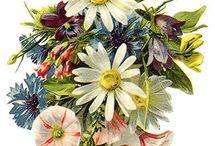 !! Fabulous Fleurs !! / by Karien Mulder
