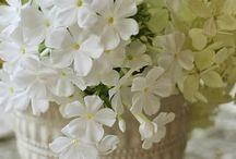 Białe jest piękne. / Biel to piękny kolor, nie tylko dla uśmiechu.