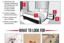 How to Identify Bed Bugs / Do you know how to identify bed bugs? What does a bed bug look like? How do I know if I have them?