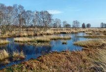 Friesische Landschaften