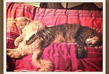 My cats / I love animal