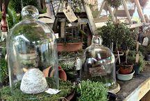 Home Garden Terrarium