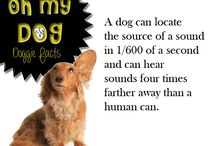 Oh My Dog Facts!! / Interesting facts about our favourite canine pals!!
