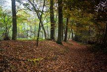 AUTUM-Jesień / Jesień ,brąz ,zdjęcia