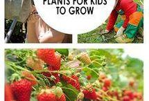 12 EASY PLANTS KIDS CAN PLANTS