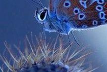 Mavi bulutlardaki mavi kelebekler