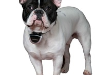 Chien Mimi / Les chien que j aime
