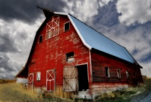 collection of barns / by Sara Hill Kinney