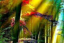 Яркие краски волшебного лета