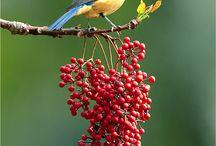 Beautiful Nature ;)