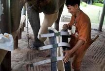 elefantes e outros animais