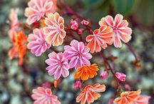 Garden / by Gloria M-M