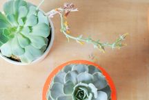 Succulents & Houseplants