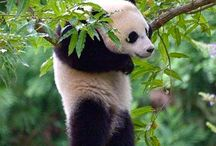 The Panda is hanging / I died when I saw this