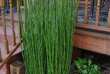 plants: gardening indoor & out