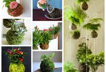 plantas / jardins caseiro