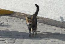 gatti con coloseo