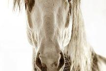 horses love / by Jennifre Gulledge