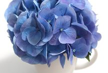L.A. Dreamin'® Hydrangea Inspiration Board / L.A. Dreamin'® Hydrangea makes a great cut flower. Long-lasting in any vase, it is perfect for bringing inside! For a pop of color in any room, or a more dramatic centerpiece on your table, L.A. Dreamin'® will bring a bit of summer inside.