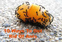 εξόντωση μυρμηγκιών