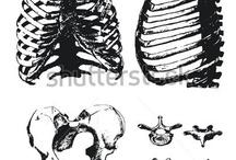Dem' ~ Bones / skeletons&.. / by Tyler Creek