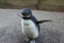 We love our animals / by Adventure Aquarium