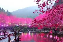 Travel: Japan