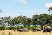Botswana / Ontdek Botswana!  De exclusiviteit van Botswana moet u zelf ervaren. Reist u met Talisman, dan ervaart u de waanzinnige flora en fauna op alle mogelijke manieren: tijdens prachtige boottochten, wandelsafari's, gamedrives of zelfs een vlucht over de eindeloze landschappen.