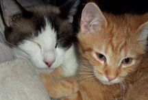Local Animal Shelters / We always encourage finding your next furry friend at an animal shelter or rescue!
