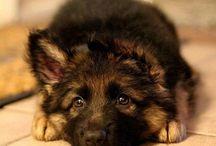 Søte dyr ❤️