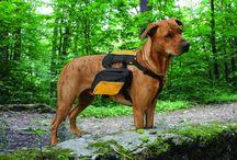 Dog Accessories / by FancydressDog .com