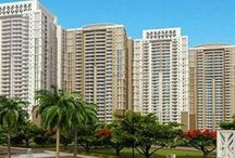 DLF Park Palace Apartment for rent in Gurgaon