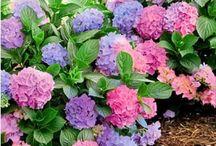 Garten / Pflanzenschnitt