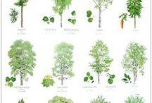 Ympäristökasvatus