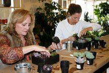 Succulent Workshops / Succulents