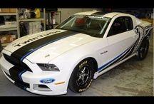 Race Mustangs