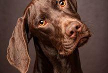 Doggies / by Jennifer Goodwin