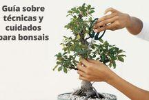 Bonsai Groud