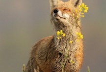 Smelling Flowers / Take time to smell the flowers ♥ / by Cynthia Kelly