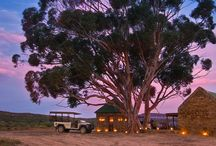 Safari / You have never seen the big five? You want to see real wildlife and you want to live in absolutely luxury lodges? Join us on domizile.de or fine-rentals.com ...