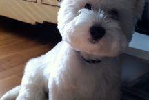 westie love / by tucker's doggiemama